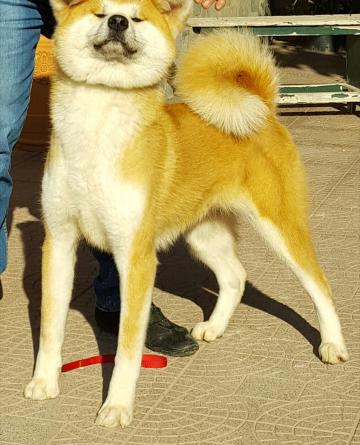maiyoshi